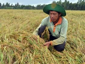 """Nông nghiệp lần đầu tiên tăng trưởng âm: Nông dân đang """"kiệt sức"""""""