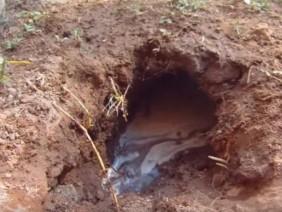 Phát hiện trong vườn có một 'hang rắn', sau khi đổ nước vào mới vỡ lẽ