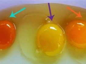 Cách phân biệt chính xác trứng gà khỏe và trứng mang mầm bệnh