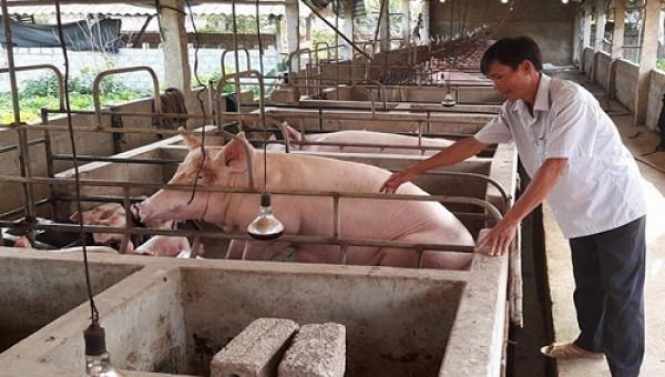 Dự án Lifsap tại xã Quảng Phong đang phát triển mạnh mẽ