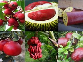 Lạ mắt khi trái cây bất ngờ