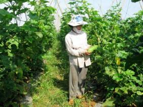 Trồng rau quả sạch, nhà nông Đại An thu tới 200 triệu đồng/ha