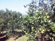 Cuộc bứt phá của nông nghiệp huyện Cao Phong