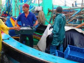 """Ngư dân Bình Định hối hả tìm nơi trú ẩn, vào bờ bán """"lộc"""" biển"""