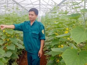 Lâm Đồng: Hiệu quả trồng dưa baby trong nhà kính