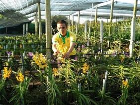 Đại gia hoa lan đất thép Củ Chi