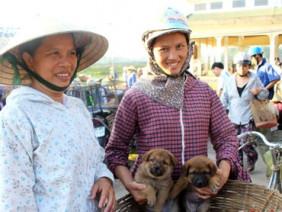 Độc đáo ghé thăm chợ chó con ở Nghệ An