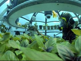 Khó tin: Lặn xuống biển để… trồng rau