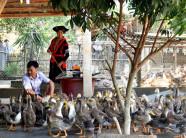 Vịt bầu Minh Hương - đặc sản không nơi nào có được