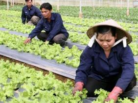 Chung tay sản xuất, kinh doanh nông sản an toàn