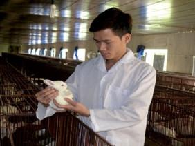 Làm giàu từ nuôi thỏ, giúp dân thoát nghèo