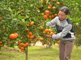 Tăng năng suất vườn cây ăn trái nhờ hệ thống tưới nước tự động