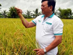 Ngỗ giám đốc và mối duyên nợ với cây lúa