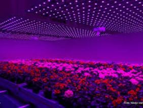Thăm nông trại, ngỡ lạc vào… hộp đêm ở Hà Lan