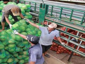 Thương lái Trung Quốc tăng cường thu mua, dừa khô 'sốt giá'