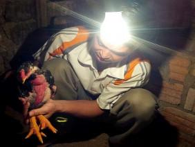 Vật nuôi mới: Cuộc chơi mạo hiểm của nhà nông
