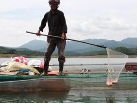 Người làm giải trí nuôi cá diêu hồng, nuôi dê trên núi