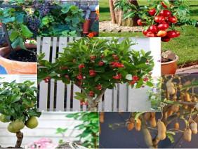 Mãn nhãn với những loại cây bonsai cho quả vừa đẹp mắt lại ý nghĩa