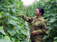 Yên Phong nỗ lực đào tạo nghề cho lao động nông thôn