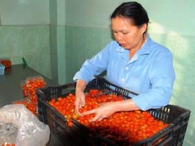 Khan hàng, cà chua tăng giá mạnh