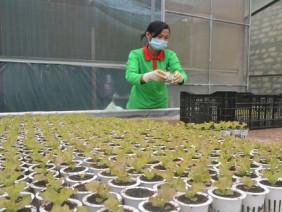 Mời chuyên gia từ Mỹ thiết kế vườn rau siêu sạch tiền tỷ ở Đà Lạt