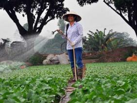 Vựa rau - lúa Đông Anh đạt chuẩn nông thôn mới
