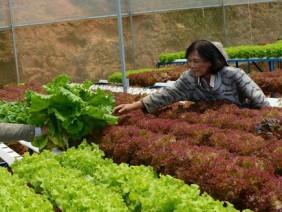 Làm nông nghiệp hiện đại - nông dân thu tiền tỷ