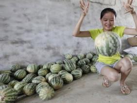 Dưa hấu Trung Quốc nảy như bóng cao su khi ném