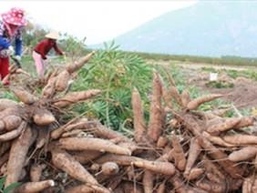 Nông dân lao đao: Cứ đến mùa giá lại lao dốc