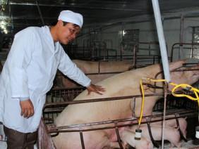 Từ tay trắng nuôi lợn thành tỷ phú