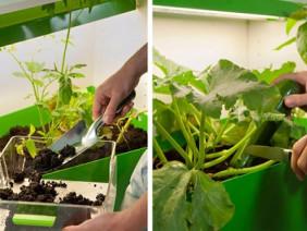 Ở chung cư vẫn tha hồ ủ phân trồng rau trong nhà
