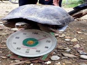 Rùa lạ nặng 13kg được trả 100 triệu, chủ quyết không bán