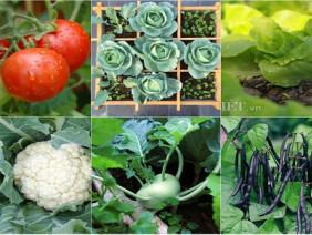 Bắt tay trồng ngay 6 loại rau củ quả sạch phục vụ cho bữa ăn gia đình