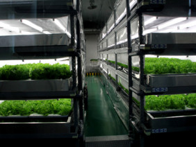Đưa môi trường vô trùng vào trồng rau siêu sạch ở Long An
