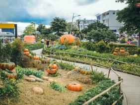 Vườn bí ngô ở Bình Tân: Điểm chụp ảnh hot nhất Halloween năm nay cho giới trẻ Sài Gòn