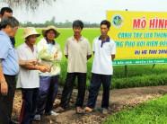 Canh tác lúa thông minh thích ứng biến đổi khí hậu: Bỏ hẳn thói quen canh tác lạc hậu