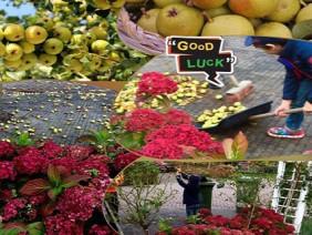 """""""Lác mắt"""" vườn cây ăn quả nhiều màu sắc sai lúc lỉu của bà mẹ Việt Kiều"""