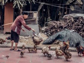 Bộ ảnh bà cụ áo nâu 97 tuổi chăm gà chạm đến hàng ngàn trái tim