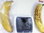 Công nghệ bảo quản Nhật Bản: Giúp rau quả tươi 20 ngày