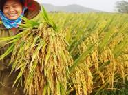 Sản suất khoa học - nông dân thu lợi nhuận với vụ mùa bội thu