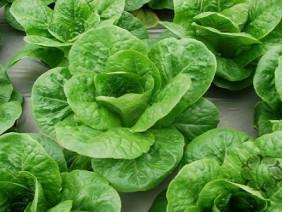 Bí quyết trồng và chăm sóc rau sạch tại nhà tươi xanh quanh năm
