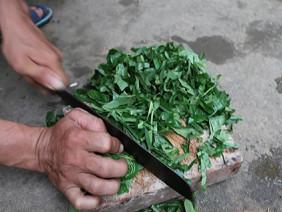 Chế phân bón từ lá trầu trồng cam hiệu quả