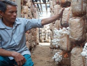 Mạnh dạn làm giàu với mô hình trồng nấm nông dân thu nửa tỷ mỗi năm