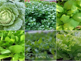 6 loại rau họ cải sẽ lên ầm ầm nếu trồng ngay đầu tháng 11