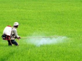 Biện pháp phòng trừ sâu bệnh cho cây trồng hiệu quả không dùng thuốc BVTV