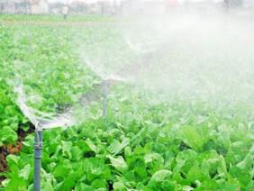 Ứng dụng hệ thống tưới nước tự động cho rau màu mang lại hiệu quả cao
