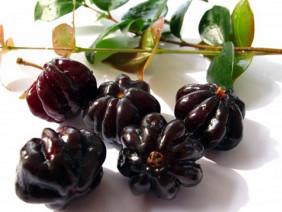 Mê tít những trái anh đào 8 múi đen thẫm cực lạ