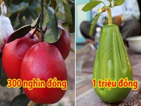 4 loại bưởi độc đáo, lạ lùng nhất Việt Nam, số 3 chắc chắn bạn chưa nghe qua