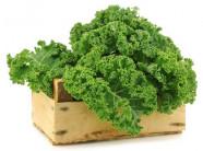 Rau cải xoăn kale làm bạn với thùng xốp