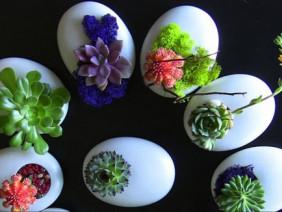 Sáng tạo với kiểu rau mầm mọc từ vỏ trứng